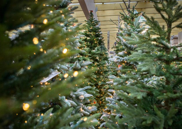 Vi bør droppe å kjøpe plastjuletrær, mener Olav Bjotveit. Av hensyn til miljøet.