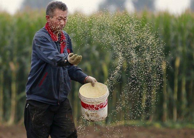 – Kina sitter på nesten 50 prosent av verdens lagerbeholdning av hvete og hele 70 prosent av maisen - de to desidert viktigste kornslagene, skriver Anders Nordstad, generalsekretær Norsk Bonde- og Småbrukarlag. (Illustrasjonsfoto)