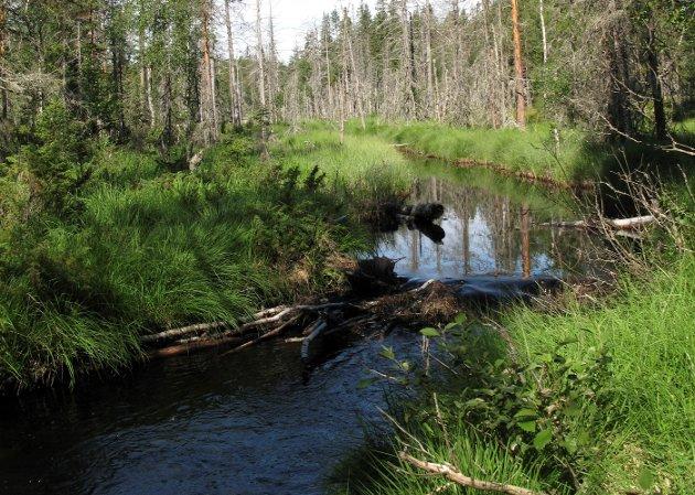 VERDI: – Det er planlagt ytterligere utbygging av 7,2 prosent av Norges areal. Det tilsvarer mer enn gamle Vestfold fylke. Mye myr og skog går tapt, og karbonutslippet øker, advarer Karin Swane i Naturvernforbundet Gjøvik, Toten og Land.