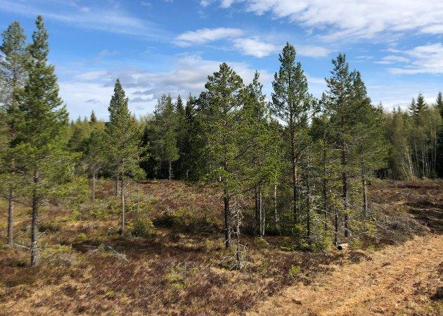SV-veteranene Kåre Aalberg og Arnfinn Monsen er kritiske til privatiseringen av både ressurser og tjenester, som da selskapet Ulvig Kiær tok over Norske Skogs eiendommer i Nord-Trøndelag.