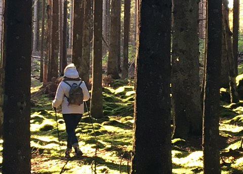 – Ved å ta deler av Kalnesskogen til næringsvirksomhet, vil både kulturminner og skogens mangfold forsvinne, skriver Inger Hansen. (Foto: Privat)