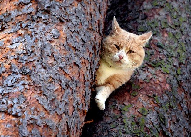 En katt har i flere dager hatt tilhold i et tre i Parkveien på Borgenhaugen. Selv ikke brannvesenet har klart å få den ned.