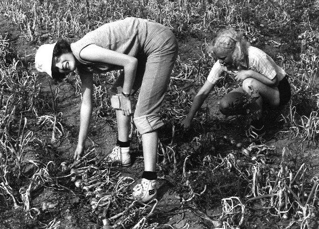 Løken skal opp av jorda. Skallerød gård på Jeløy, 1980.