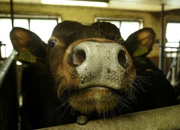 Påstanden om at alle former for kjøttproduksjon øker risikoen for pandemier er kort og godt feil, skriver Ole Alvseike.