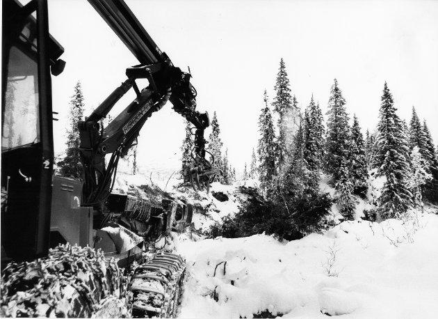Tiurhaugen naturreservat 1991. Statens Skoger har hogd innenfor det området som Rana kommune opprinnelig hadde foreslått vernet, og helt inntil grensen av det reduserte forslaget fra Fylkesmannen og direktoratet for Naturforvaltning - før avgjørelsen om vern er fattet.