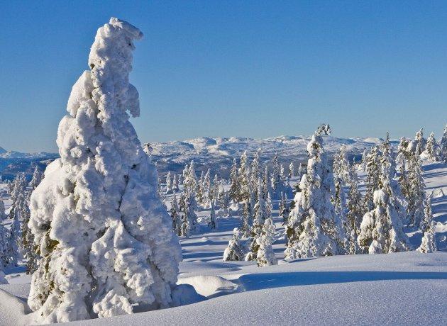 Knutefjellområdet er så unikt at det trenger naturvern. Bildet er tatt bak Knuten med Blefjell i bakgrunnen.