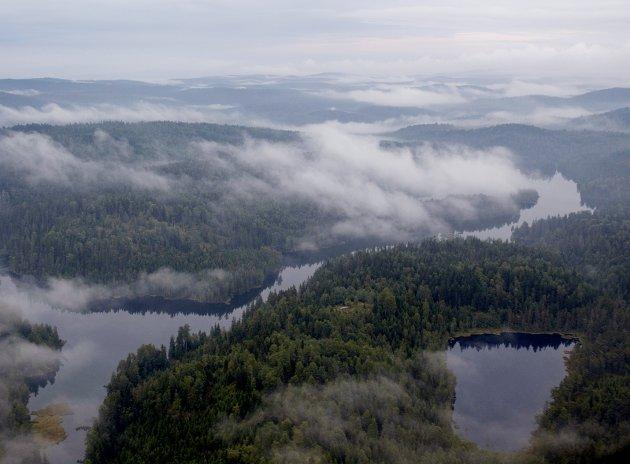 Vern som hinder: Vern av skog stopper muligheten til å utvinne tømmer fra området. Dette fører blant annet til tap av arbeidsplasser, og ikke minst miljømessige konsekvenser, skriver innsenderne som mener det er en dårlig idé å opprette en nasjonalpark i Østmarka. Foto: NTB scanpix