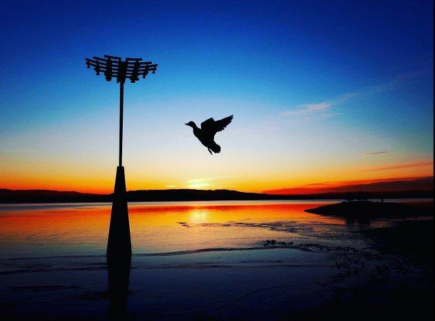 FØRSTEPLASS: Solnedgang ved Hamar-brygga. Dette sier juryen: Bildet er et godt eksempel på det særegne med det fotografiske uttrykk: «Det avgjørende øyeblikk». Her har fotografen fanget en due i det perfekte øyeblikk, duen er frosset i en vakker og elegant positur, noe som er krevende å få til. Bildet har en umiddelbar slagkraft og stor «wow-faktor», som gjør at interessen fanges hos oss som betraktere. Etter juryens oppfatning ville bildet hevet seg ytterligere med en kvadratisk komposisjon (beskåret på høyre side) og med noe mindre redigering av farger og kontrast. Fotografen har fanget en unik stemning ved ett av Innlandets mest kjente landemerker.