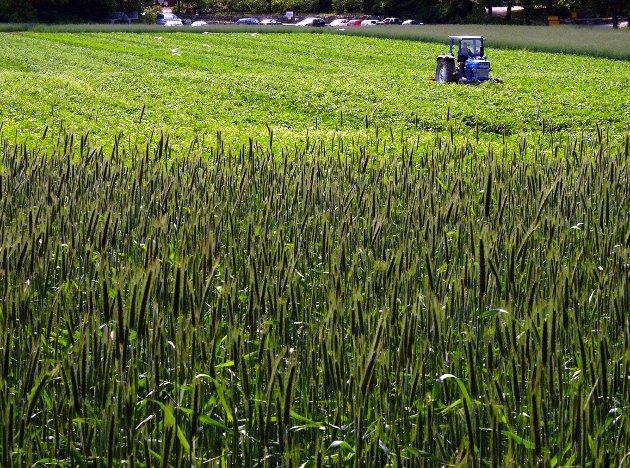 Foretrekker: MdG ønsker ikke at dyrket og dyrkbar mark skal bli til gressplenproduksjon.– Tiden er inne for tydelige retningslinjer for å sikre at produksjon av ferdigplen ikke reduserer vår kapasitet til å produsere mat, og gir dårligere biologisk mangfold, skrives det.