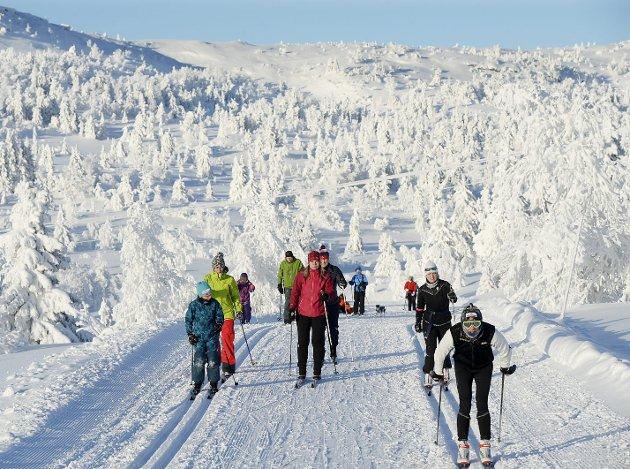 Hundrevis av kilometer med skiløyper koster millioner av kroner hver eneste vinter. Flere steder er det vanskelig å finansiere denne infrastrukturen.Foto: Asmund Hanslien