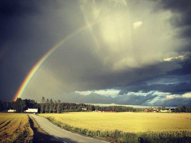 UKEVINNER: Sensommer ved Femsjøen. Foto: Therese Andersen