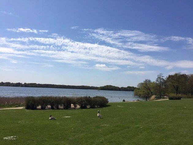 Samlet inspirasjon: Utsikt fra Ingemanns bolig mot Sorø sø mai