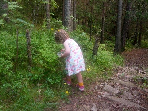 Skogsidyll før snauhogst
