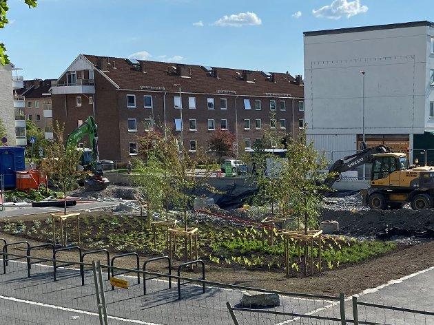 Debattanten er allergiker og reagerer på at kommunen har valgt bjørketrær i den nye parken på  Lambertseter.