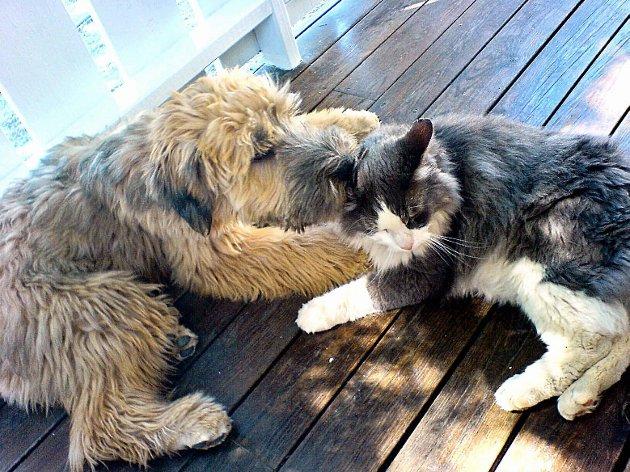 Hund og katt: Møter mellom hund og katt ender ofte i slagsmål, men de kan også, som her, leve i fredelig sameksistens.Arkivfoto