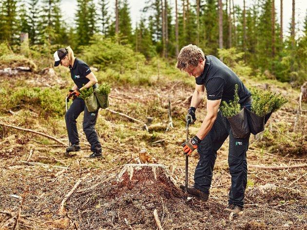 VISER VEI: – Ungdommen og skogbruket viser vei!, skriver Nils Kristen Sandtrøen. (Illustrasjonsfoto)