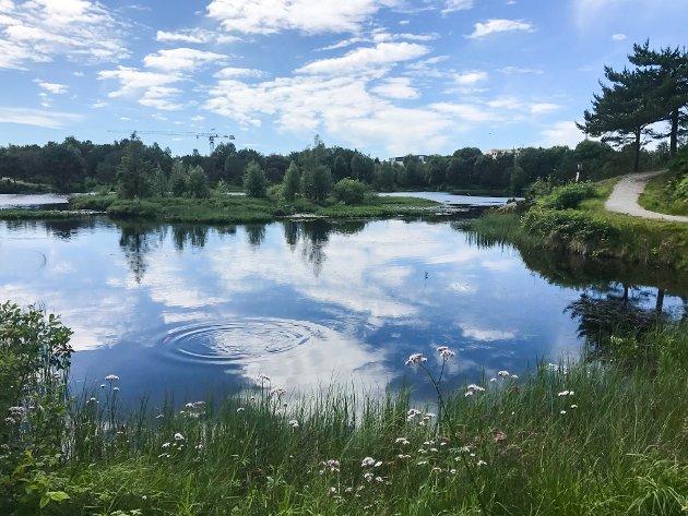 Idylliske Kvassnesstemma i Knarvik. Arkivfoto