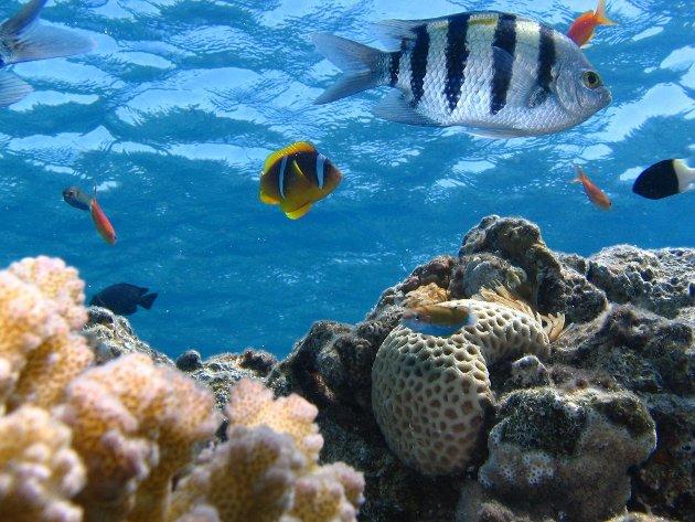 Hva er tiltak for miljøet? Hvordan kan vi ta best vare på naturmangfoldet og jorden vår?
