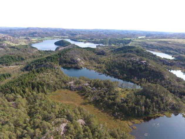 Bildet viser myr, skog og tjern i planområdet.
