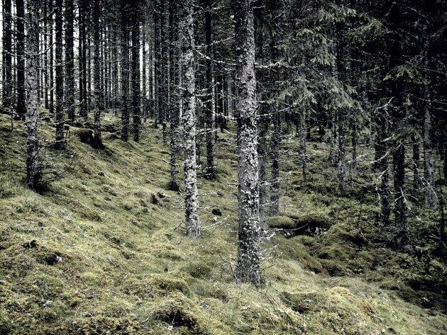 TROLSK: – Har du sett norske troll noen gang? Ikke det? Foto: Anita Krok