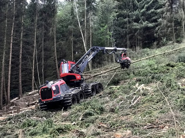 SKOG: Skogen er Innlandets viktigste bidrag for en grønnere fremtid nasjonalt.