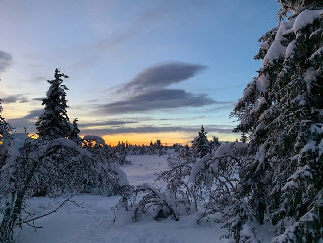 Desemberidyll ved Sjøsetermyra