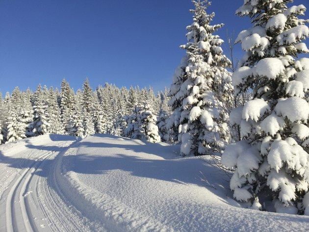 FINT PÅ HADELAND: Ballangrud-kollen en fredag i slutten av januar,  sol og nykjørte skiløyper! Foto: AM  Presthagen