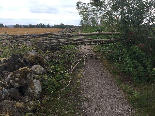 STORM: Når trær faller i stormen setter det assosiasjonene i svin g. Også hos Bjørn Andersen. Det skriver han om i dagens Signert. Illustrasjonsfoto: PRIVAT