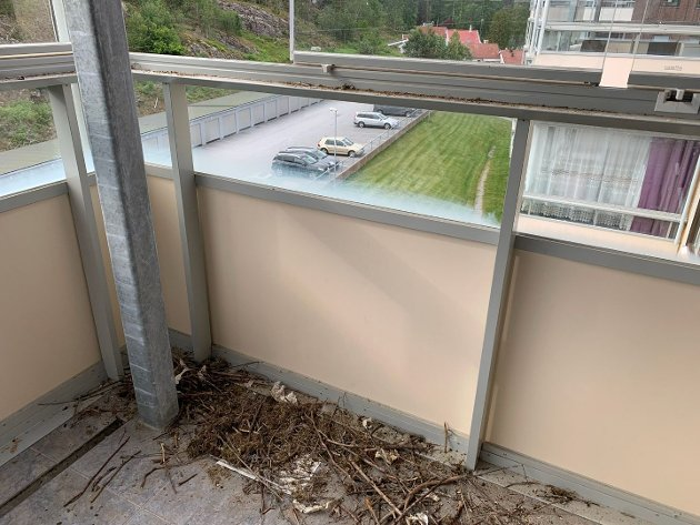 KAIER: Slik så det ut på en av verandaene i borettslaget etter kråkefuglens uhemmede herjinger. Foto: Privat