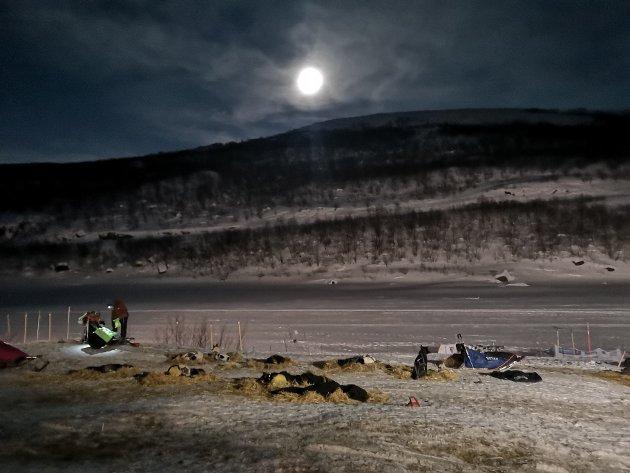 EN VELFORTJENT HVIL for kjører og hunder underfullmåne og i majestetiske omgivelser.