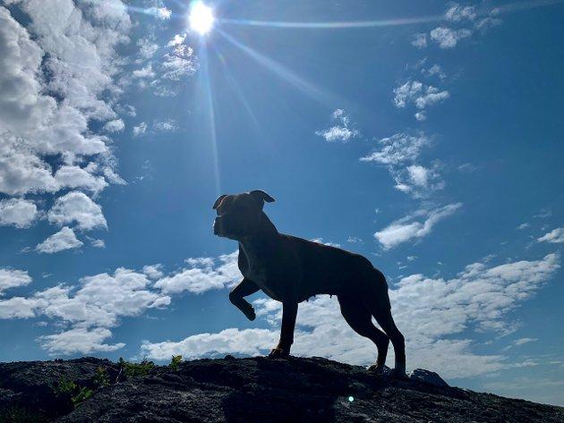 Lexi poserer på toppen av Fuglaskår i Nordrepollen.