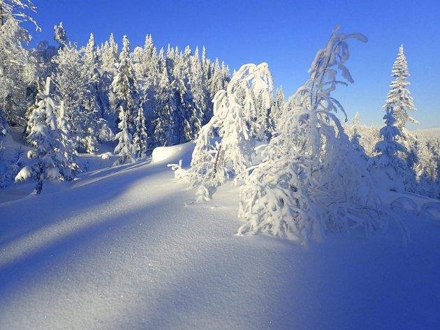 Vinterlig langs skiløypa under Trettekollen som går mellom Lelangen i Lier og Langvann i Nedre Eiker.
