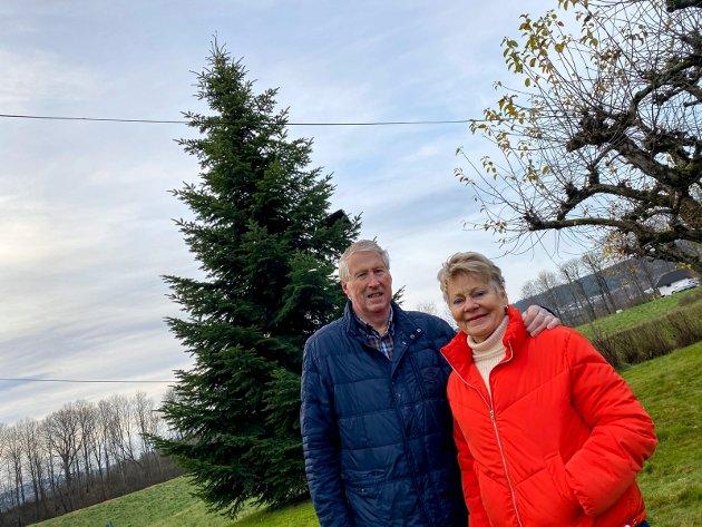 Over 20 år: Treet har stått i hagen til Arne og Ingeborg Sydsæther siden sommeren 1999. Nå avslutter det livet som årets juletre foran rådhuset i Lierbyen.