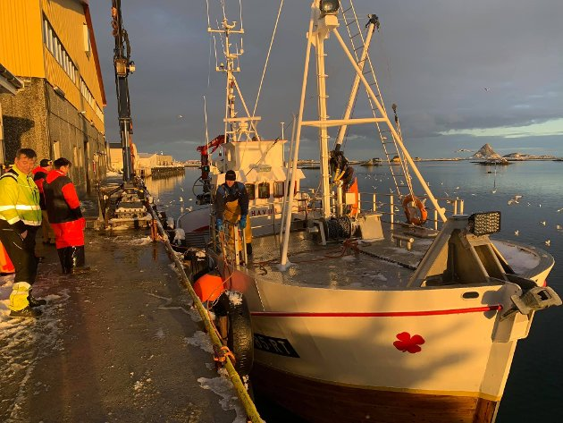 """OPPDATERT: 7. FEBRUAR. Lofotposten følger Lofotfisket tett, og vil i løpet av vinteren bringe stemningsbilder fra livet på kaia rundt om i Lofoten. RØST: """"Havur"""" kommer opp med en flott fangst til John Greger  AS"""