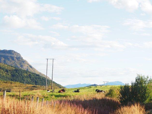 ILLUSTRASJONSFOTO. Landbruket kjenner vær- og klimaendringer på kroppen.