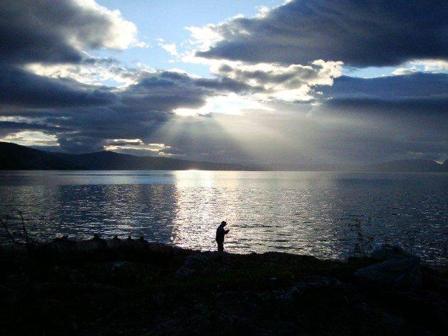 Det er komplett uforståelig at Senja kommune vil tillate oppdrett av torsk i Malangen, uten at de negative konsekvenser for det maritime naturmiljøet og naturmangfoldet i fjorden er grundig utredet, skriver forfatterne av denne høringsuttalelsen. Bildet er tatt ved Målsnes.