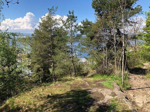 Ekebergskogen med sti.