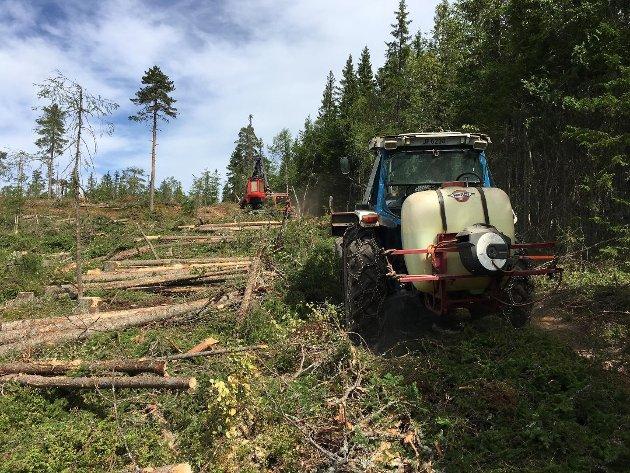 LØSNING: Alle FNs klimascenarier inneholder for eksempel skog som en viktig del av klimaløsningen.