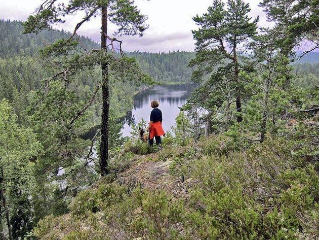 ØSTMARKAS TAK: Utsikten fra toppen av Tonekollen og ned mot Mosjøen, der Vangen ligger til høyre i bildet.