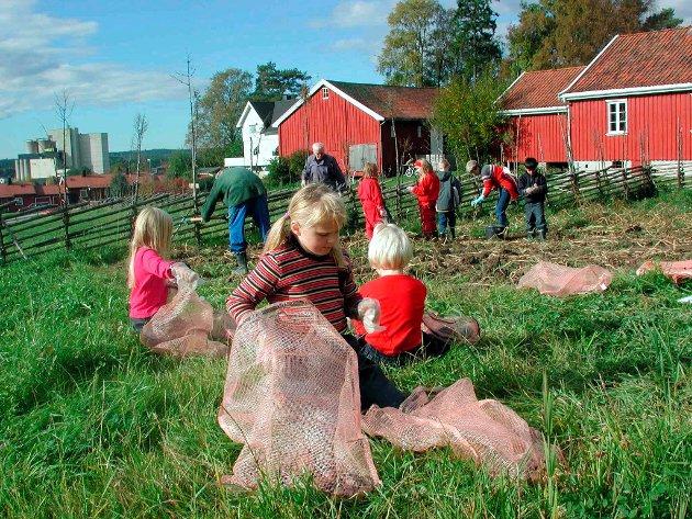 Høst: Potetinnhøsting på bygdetunet i 2001.