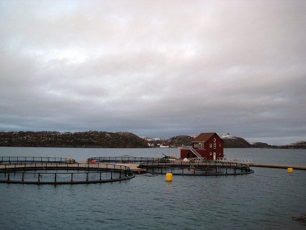 Det er skapt det inntrykk at Norge er avhengig av EØS for å få selge villfisken, oppdrettsfisken, oljen, gassen og vår hvite fossekraft, skriver Samfunnspartiets førstekandidat i dette leserinnlegget. Illustrasjonsfoto: Wikimedia Commons