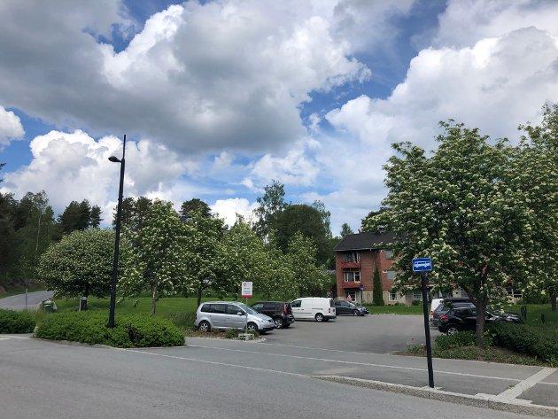 Parkvegens park anno 2021, planlegges byttet ut med en ruvende koloss langt unna heltre.