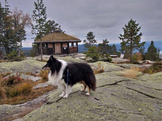 HUND: Karl A. Mortensen ber i dette leserinnlegget alle som ferdes ute å ta hensyn til hverandre, enten det er i bil, syklende eller gående på tur med en hund.