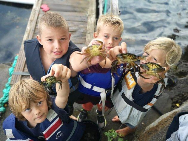 STORFANGST: Sondre, Mattis , Herman og Liam har fisket bøtta full av krabber. Noen av krabbene er noen store beist med svære klør.