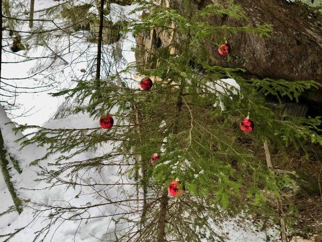 Midt inne i skogen på et sted hvor du aller minst venter det, møter det deg et juletre...