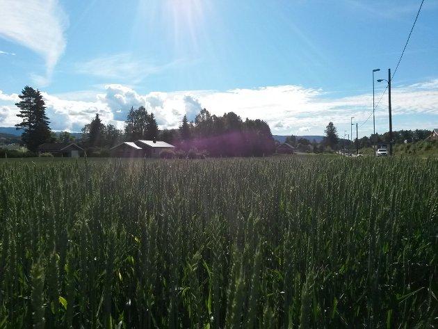 Norsk matproduksjon skjer på eit mangfald av gardsbruk over heile landet.