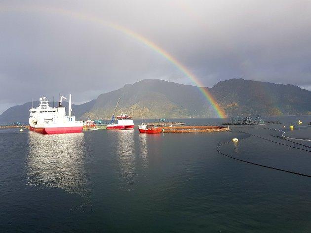 Helt siden tidlig 1970-tallet har Tingvollfjorden vært en viktig brikke for havbruksnæringen i Norge, skriver artikkelforfatterne.