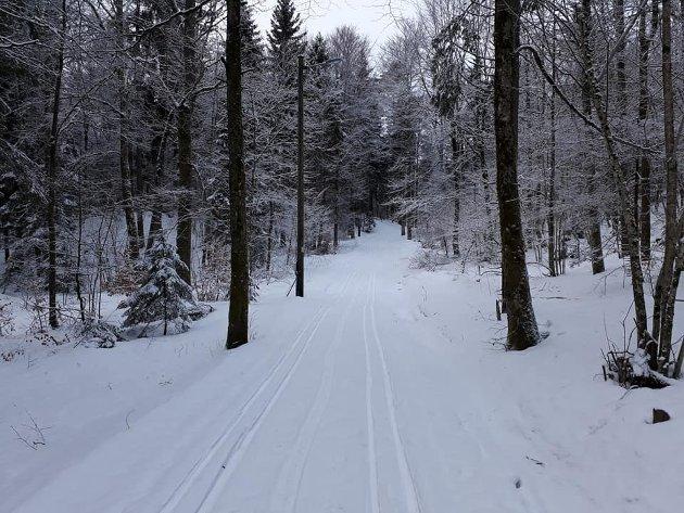 Skogen på Barkåker