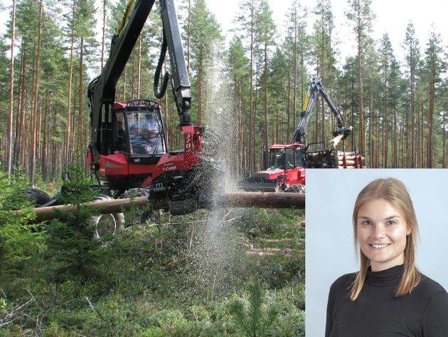 Hogst: - I overgangen til et fornybart samfunn, er vi avhengig av tømmer som kan erstatte fossile ressurser. Å forby flatehogst i Norge vil verken være bra for klimaet eller plante- og dyrelivet i skogen, skriver Ida Aarø.