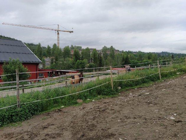 STOR FORDEL: Flytting av treningsfeltet ved Nittedal Hestesenter vil være en fordel for både hester, ryttere, gående og syklister, mener Milorad Dunderovic.